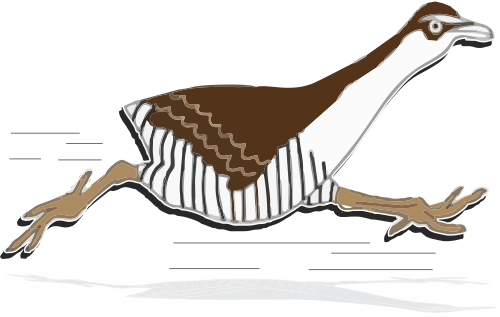 Illustration of a running koko bird